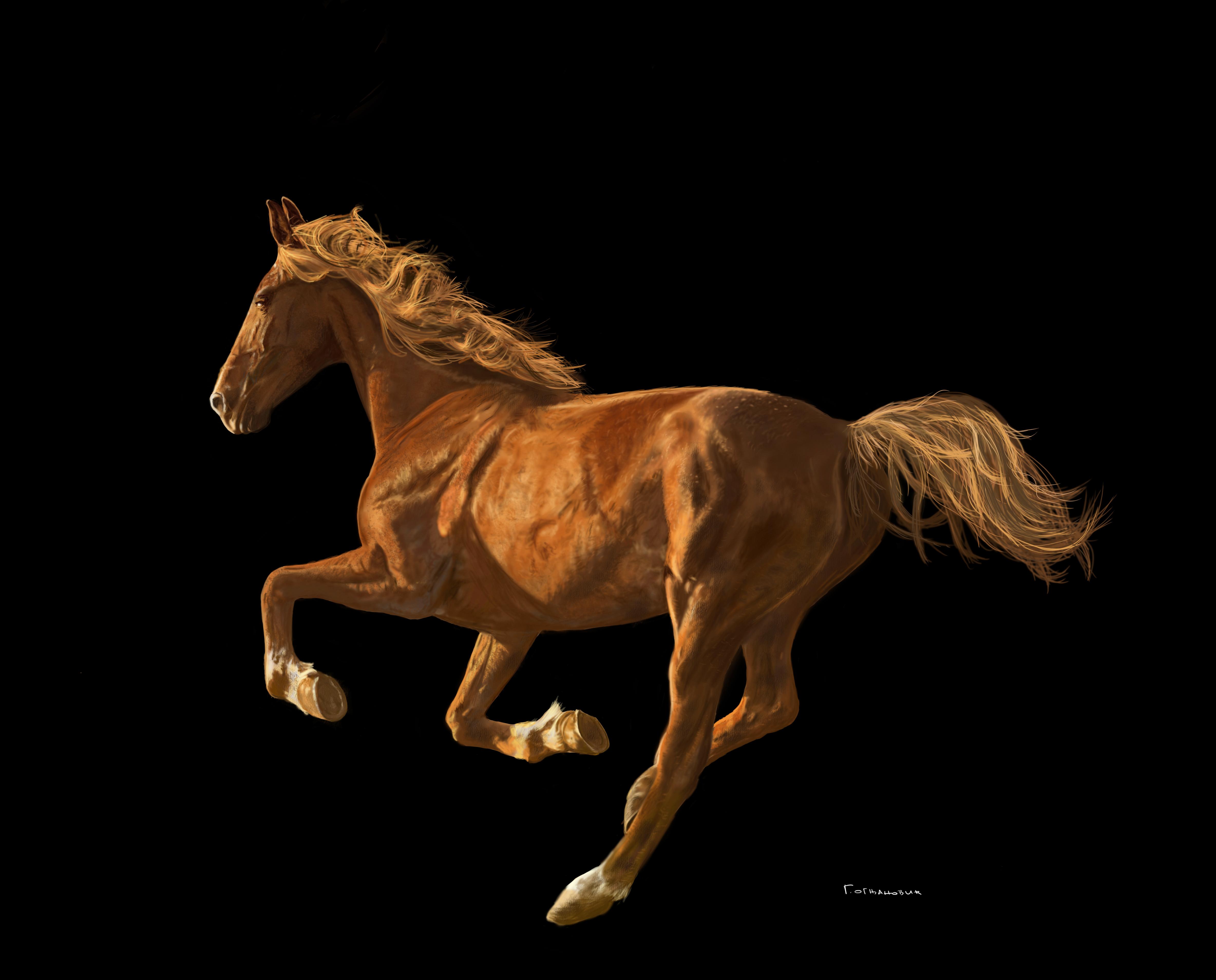 horse_goran_ognjanovic.jpg